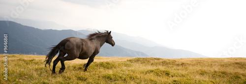 Photo Black stallion