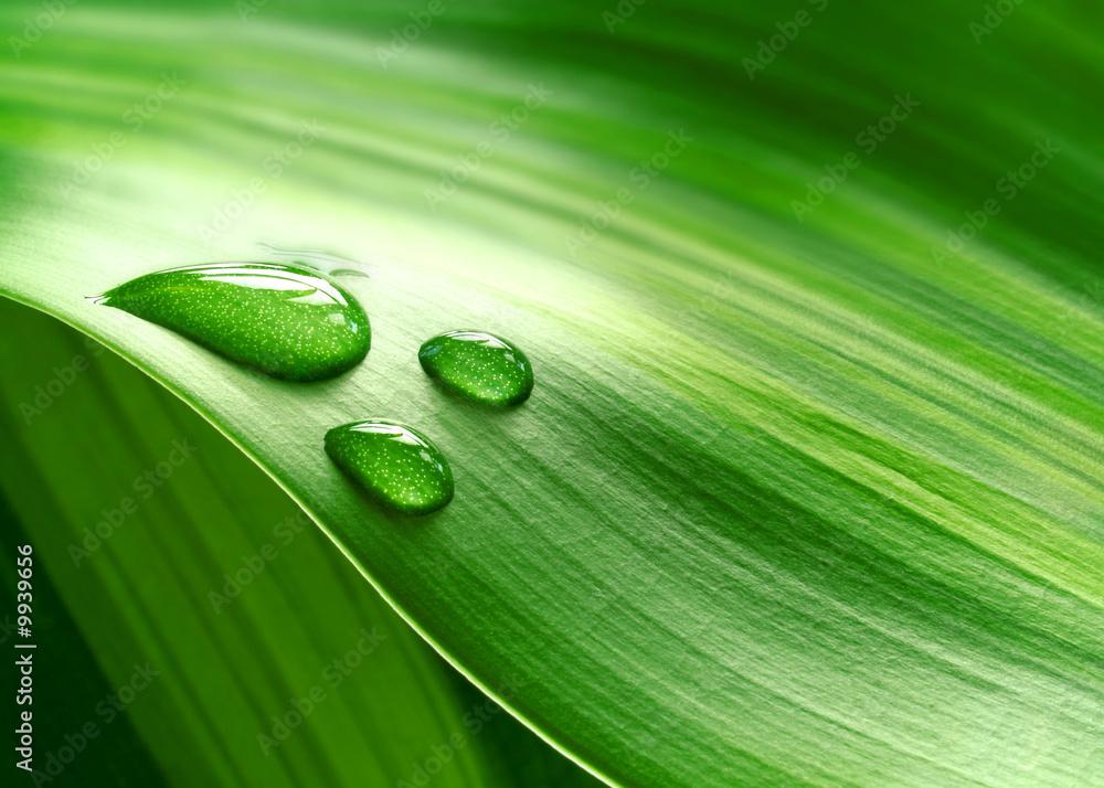 Leinwandbild Motiv - Pefkos : Close-up of green plant leaf