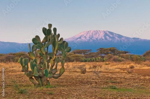 Fototapeta premium kilimanjaro góra przy wschodem słońca