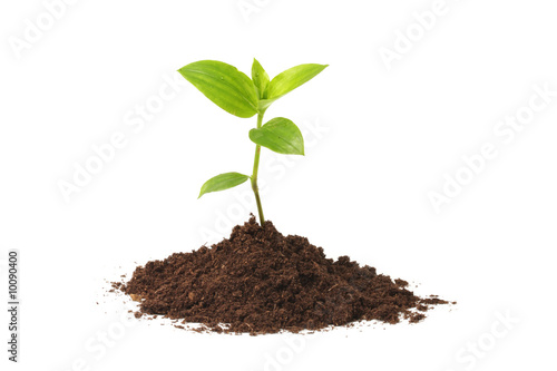 Vászonkép Young plant