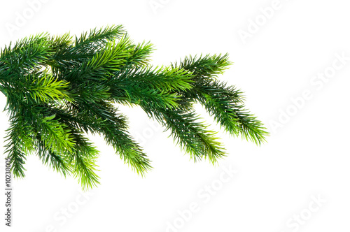 Carta da parati Close up of fir tree branch isolated on white
