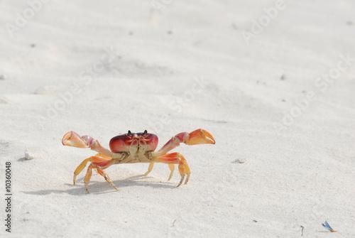Crab exploring the beach
