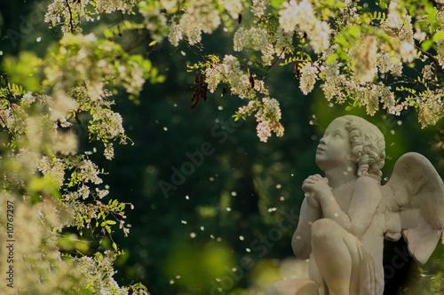 Photo la prière de l'ange aux fleurs d'accacias