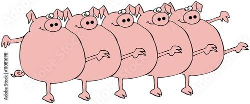 Fotografia Pig Chorus Line