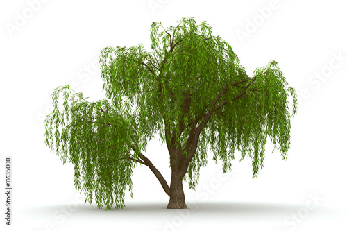 3d green tree weeping willow isolate Fototapeta