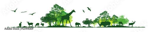 Fotografiet Wild animals