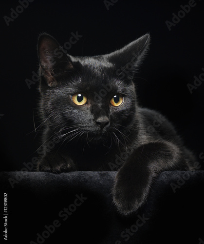 Black cat with yellow eyes #12319802