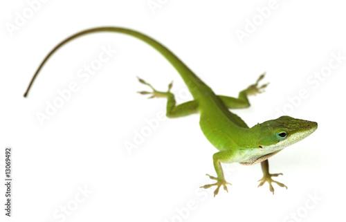 Stampa su Tela Lizard