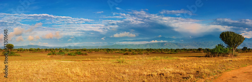 Obraz na plátně African savanna