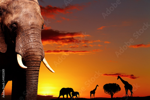 African nature concept #14132001