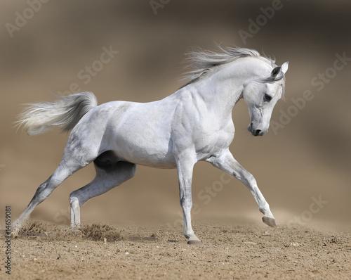 Photo white horse stallion runs gallop in dust desert, collage paint