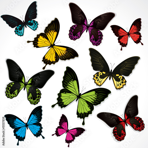 Butterflies #15137838