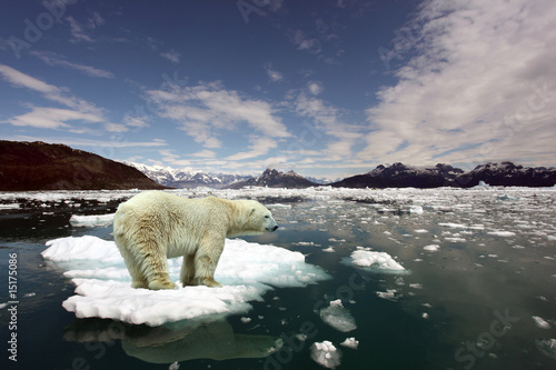 Canvas Print Polar Bear and global warming