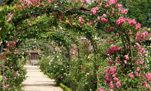 roseraie parisienne #15293086