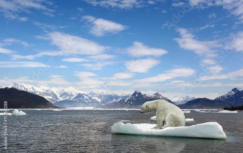 Fotografiet Polar bear and golbar warming