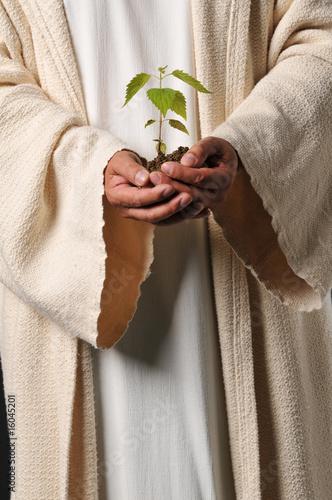 Fotografija Jesus hands holding a plant