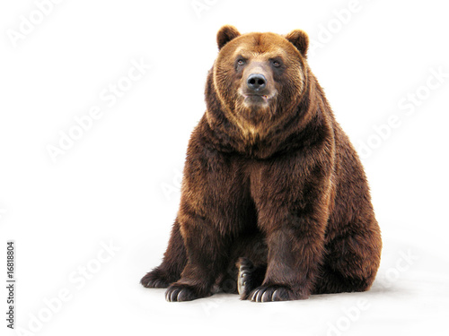 Canvas Print Bear