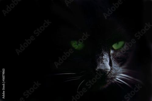 Green cat's eyes in the dark #16879863