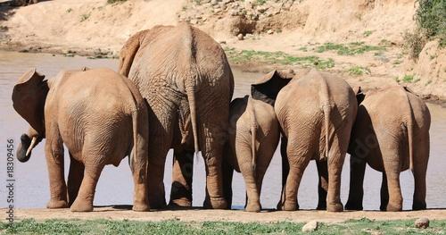 Fototapeta premium Za słoniem afrykańskim
