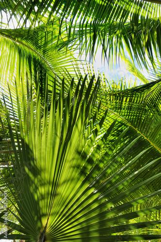 Fototapeta Zielona Dżungla Palmowa