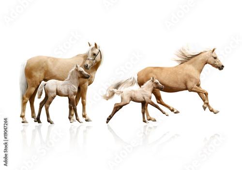 Fotografia mare and foal