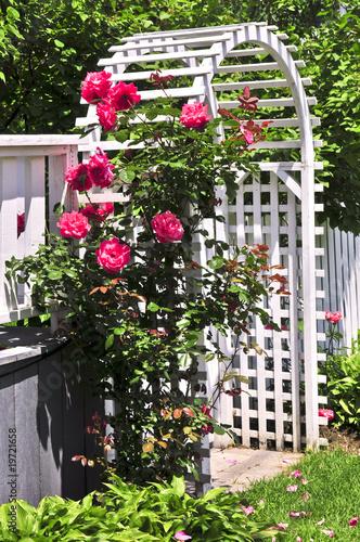 Obraz na plátne White arbor in a garden