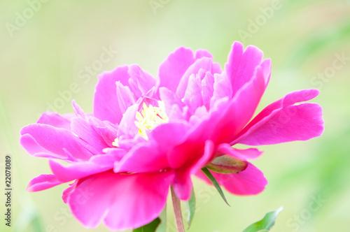 Fotografie, Tablou Spring Blooming