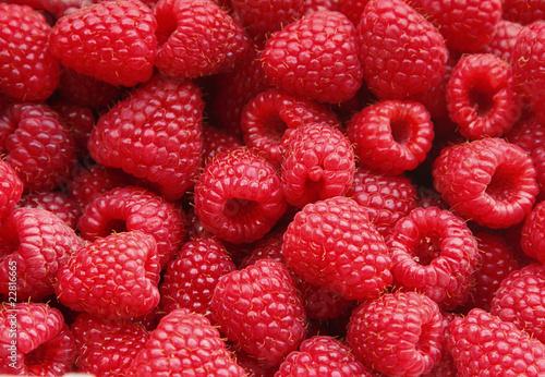 Stampa su Tela Sweet raspberry