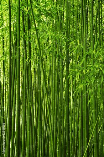 Fototapeta premium Bambusowa lasowa tekstura