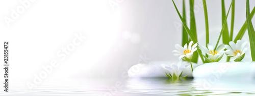 Blüten am Ufer