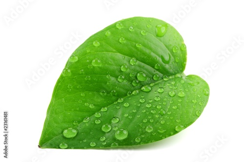 Canvas Print Green leaf with water droplets