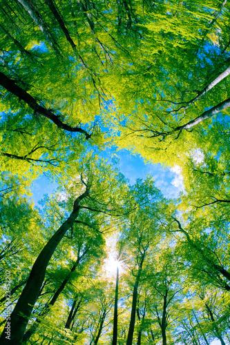 Tree canopy #23452202