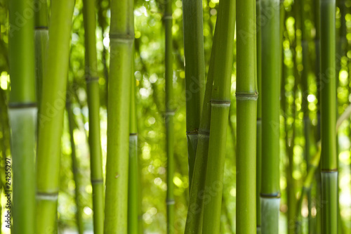 Fototapeta premium Bamboo Bamboo 06