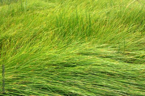 Vászonkép Grass background