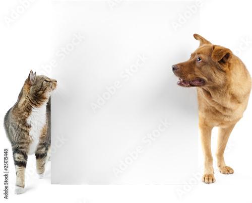 Cat and dog around banner