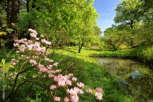 Obraz na plátně Spring landscape with pond