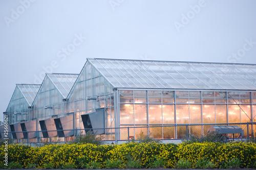 Obraz na plátne industrial greenhouse in davis