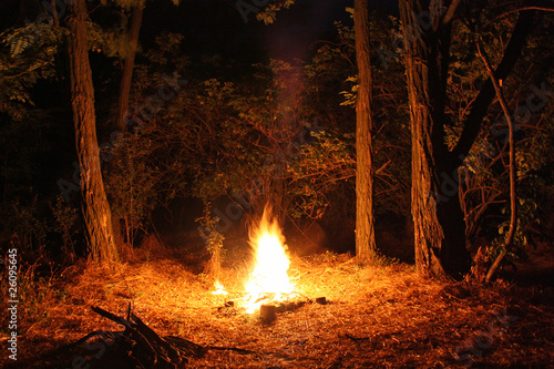 Cuadros en Lienzo Fire burning at night in a forest glade