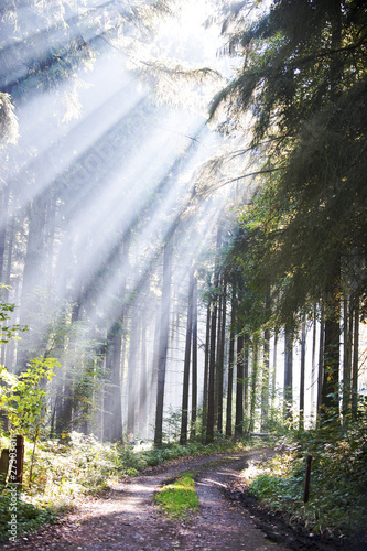 Wald mit Sonnenstrahlen #27303611