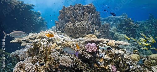 Coral scene - panorama #27761841