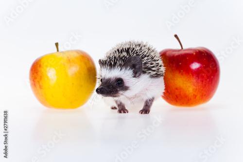 Obraz na plátne Cute hedgehog