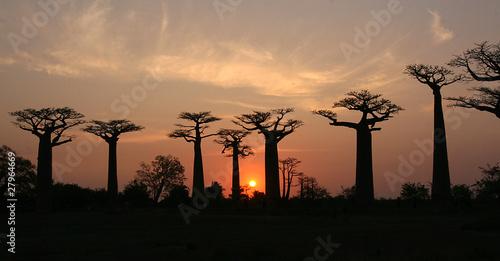 Obraz na płótnie Baobab Allee Madagaskar