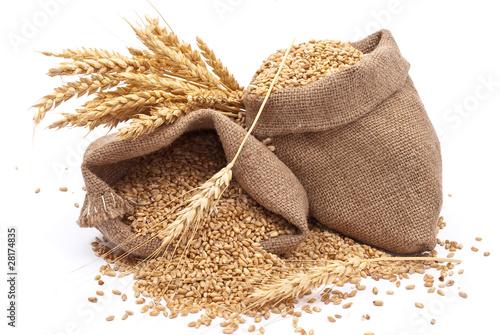 Obraz na plátně Sacks of wheat grains