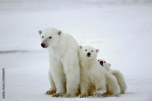 Canvastavla Polar she-bear with cubs.