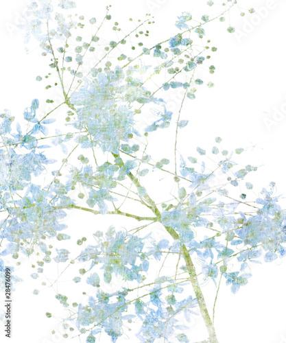 Flower Blossom on White