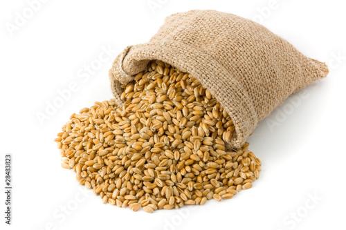 Stampa su Tela Wheat