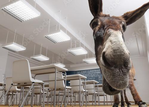 Obraz na płótnie Classroom donkey
