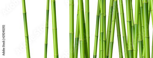 Bambous sur fond blanc 2