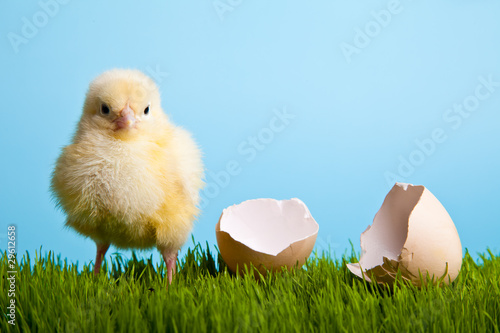 Easter eggs and chickens on green grass on blue background Fotobehang