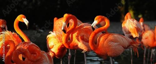 Flamingo on a sunset. #30025431